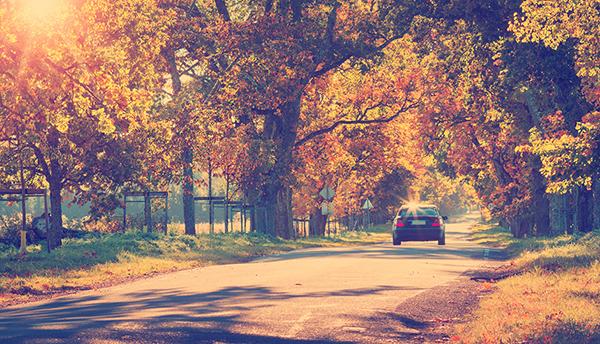 Une voiture avançant sur une route en automne